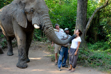 Bisou d elephant