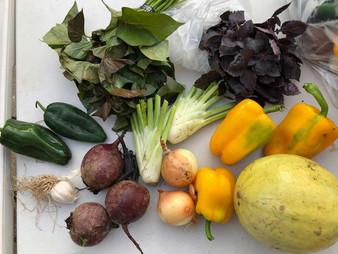 healthy-eating-program-03-web.jpg