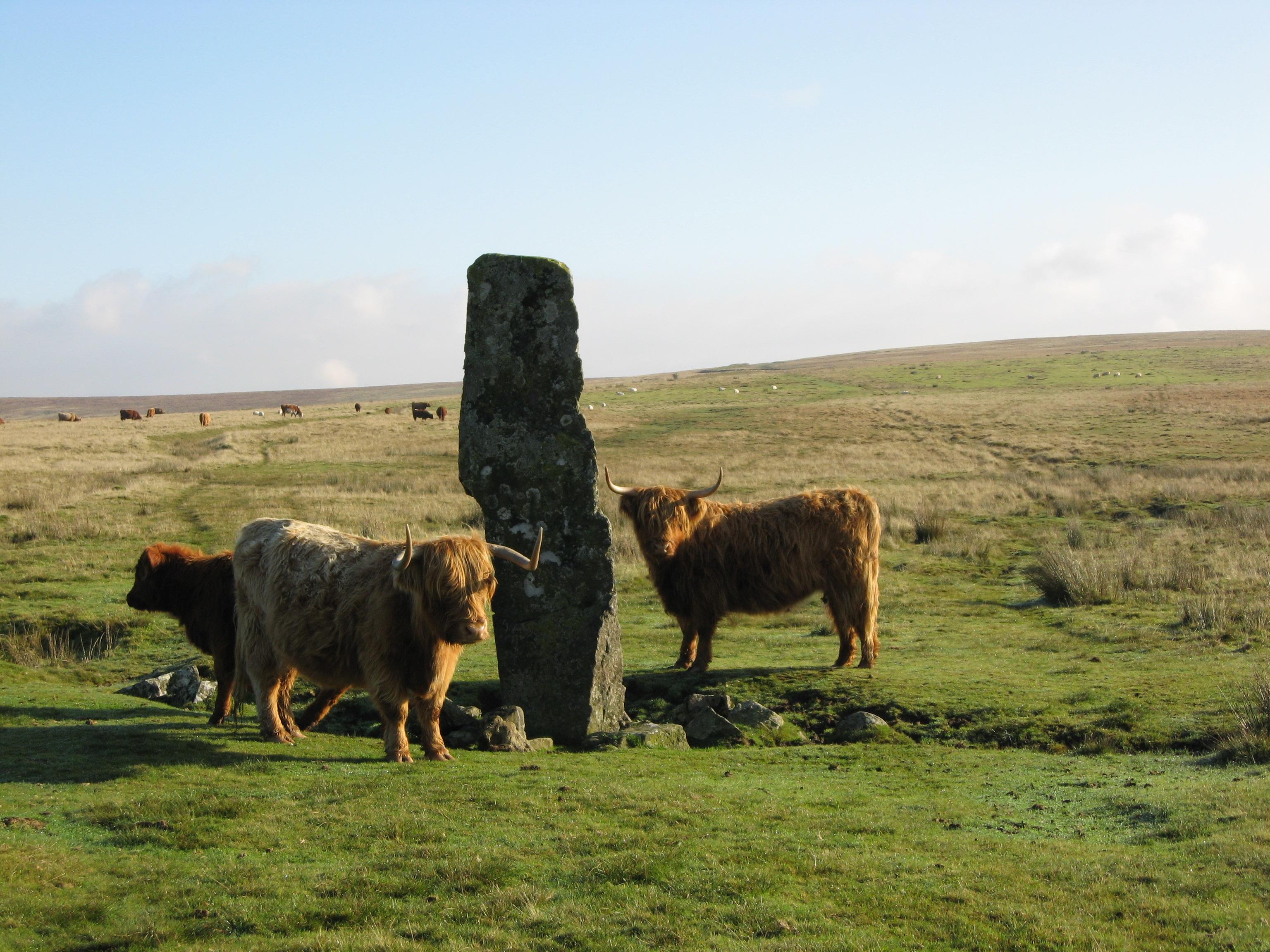 Dartmoor 13