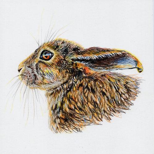 Greeting Card Hare