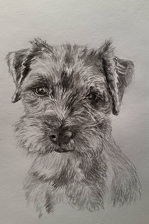 Greeting Card - Border Terrier