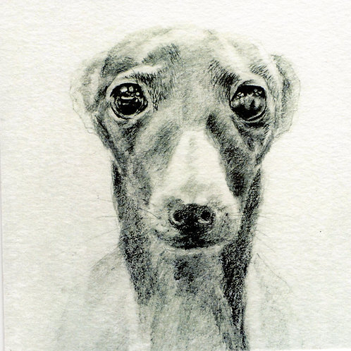 Greeting Card Whippet