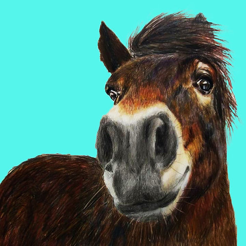 Greeting Card Exmoor Pony