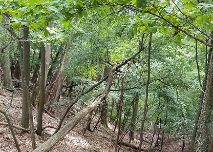 dry mesic forests