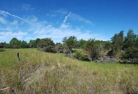 Great lakes barrens
