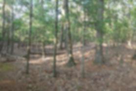 Transitional hardwood forests