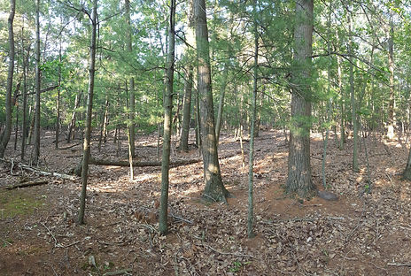 Transitional hardwood forests