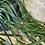 Thumbnail: Rhipsalis Paradoxa XL