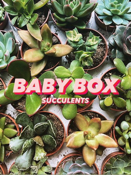 Baby Box (Succulents)