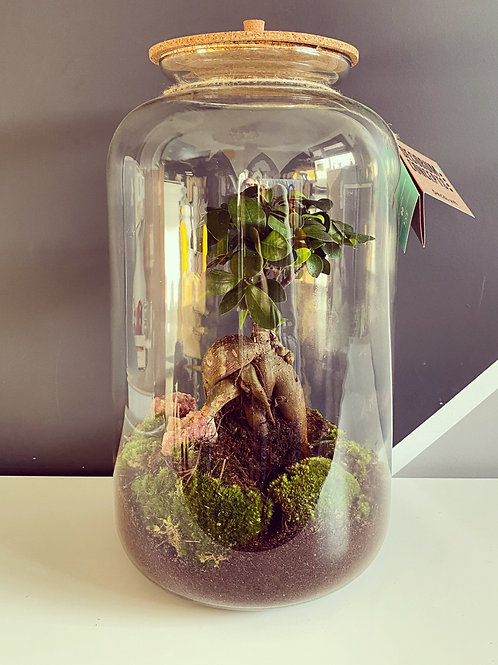 Terrarium XL (Local Delivery / Pickup Only)