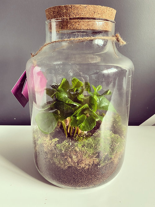 LED Terrarium (Local Delivery Only)