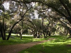 Trees:Dirt Road.JPG