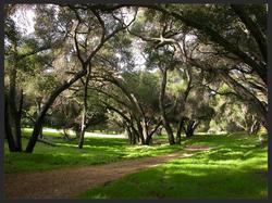 Trees:Dirt Road_edited.JPG 2014-7-27-18:9:7