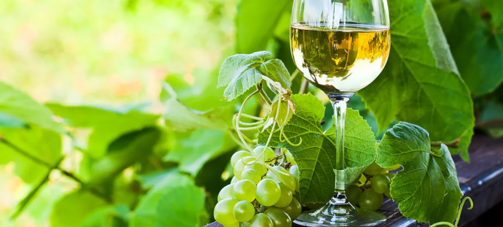 vinho-verde-ruta.webp
