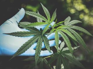 De la despenalización a la legalización.