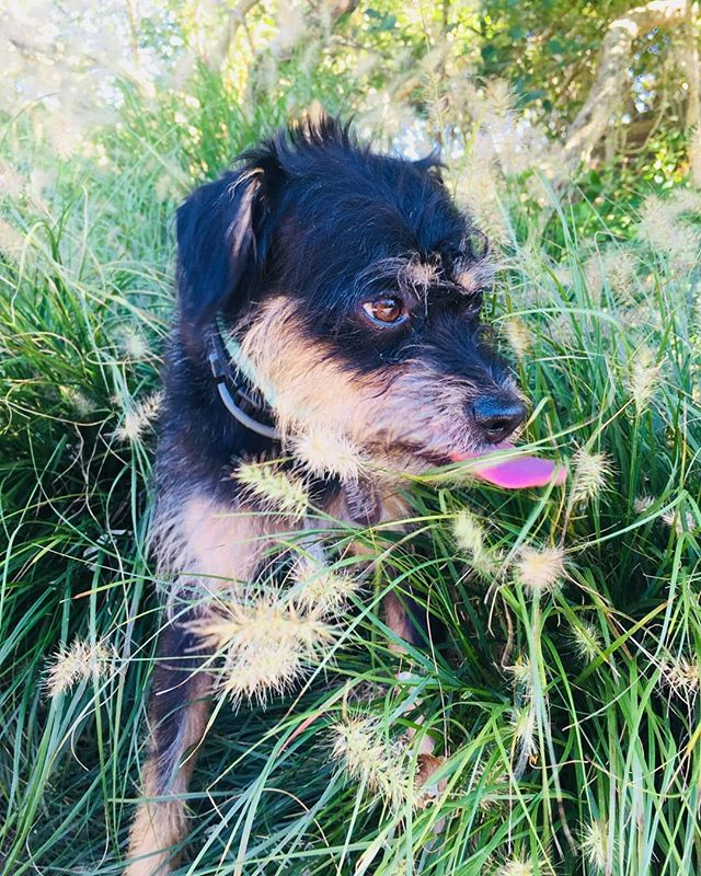 Dog's life 🐾_._._._._._._.jpg