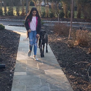 Dog pulls on the leash