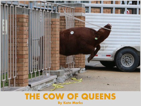 THE COW OF QUEENS