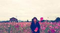 糸島 コスモス