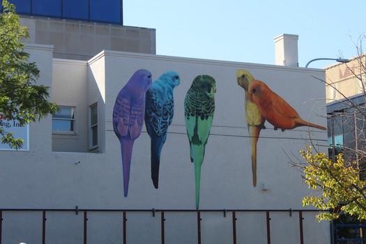 Billings Parakeet Mural