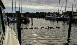 Solomon Ducks