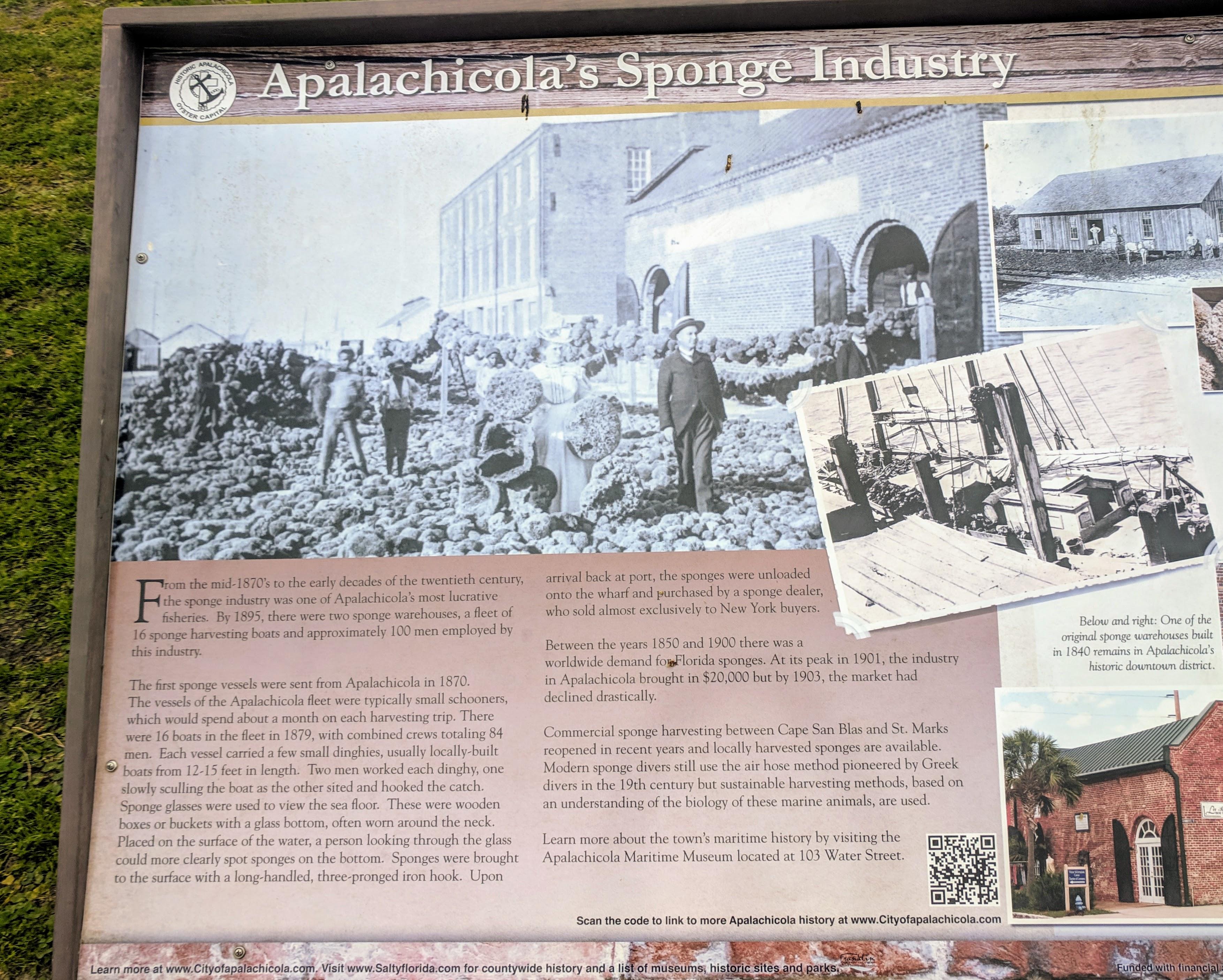 Apalachicola Sponges