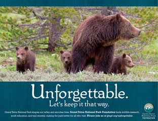Unforgettable/GTNPF