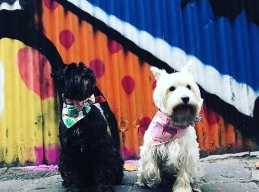 Train your dog to wear a bandana