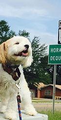 Horacio near Horatio in AR..jpg