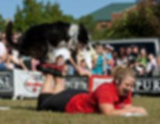 Dog trick frisbee dog foot stall Purina dog show