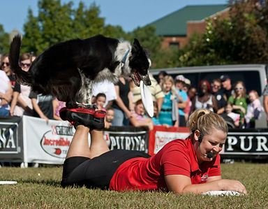 Dog trick frisbee dog foot stall Purina dog show