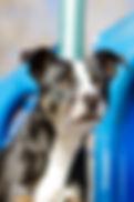 laura moretz frisbee dog show