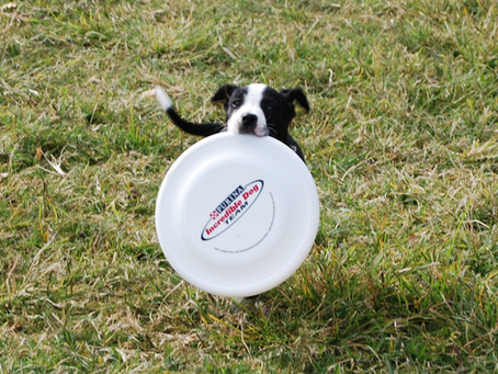 Frisbee Class Saturday February 20, 2016