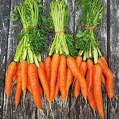 carrot2_edited.jpg