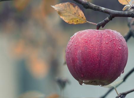 Høsten, døden og livet