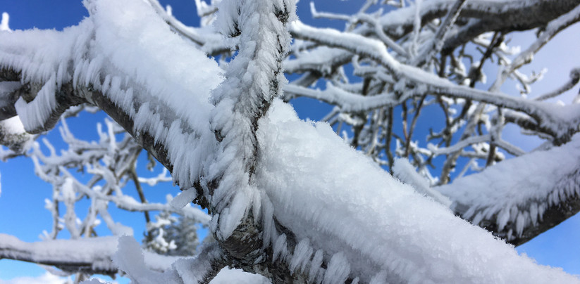 Schneeschuhtour Furna 2019-12 (10).jpg