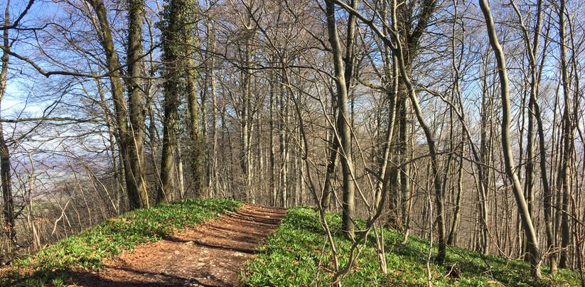 Frühlingswald auf der Lägern