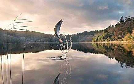 landscapes-design-fishing-ar-wallpaper-7