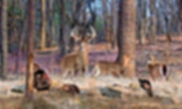 deer-art-wildlife-artwork-north-american
