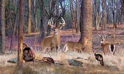 deer-art-wildlife-artwork-north-american