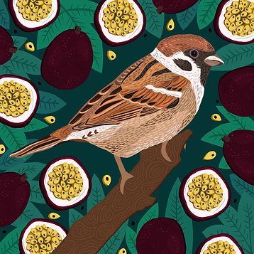 Sparrow_&_Passion_fruit.jpg