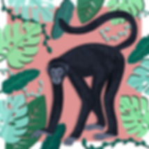 Black Spider Monkey.jpg