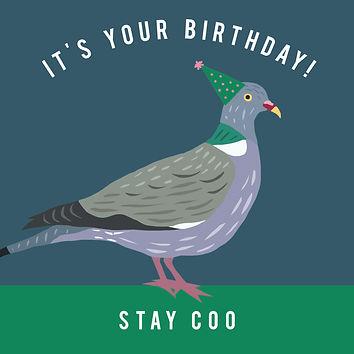 Birthday Pigeon.jpg