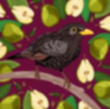 Blackbird & Pears
