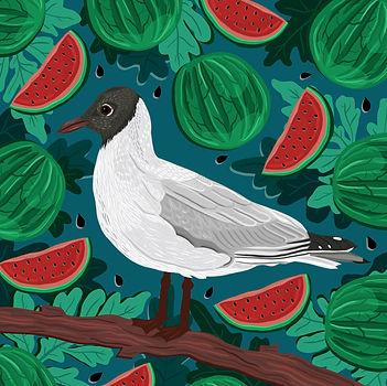 Gull & Watermelon