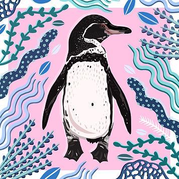 Galapagos Penguin.jpg