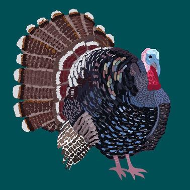 Charles Turkey.jpg