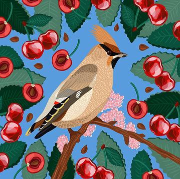 Waxwing_&_Cherries.jpg