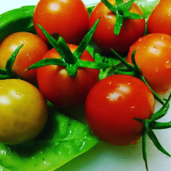Fresh picked cherry tomatoes....so sweet!