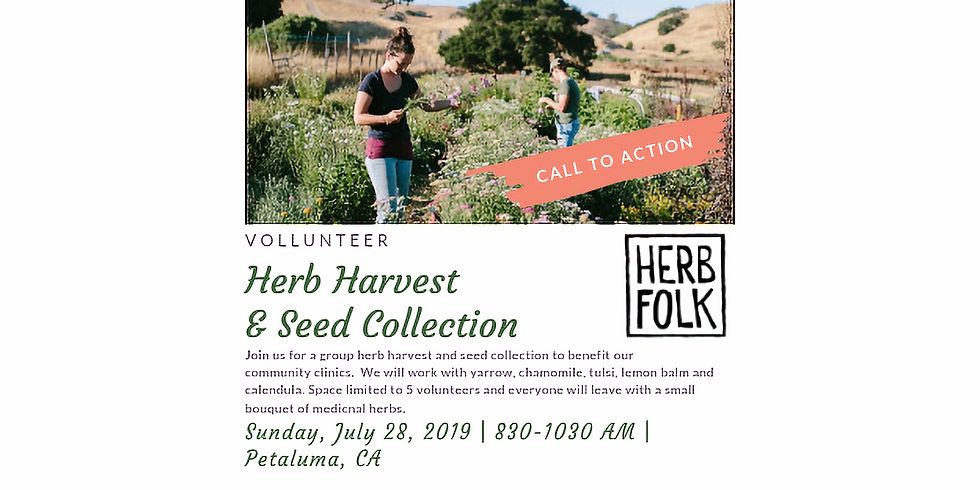 Herb Harvest and Seed Collection